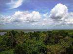 Jungle view from the top of Lamanai