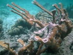 Snorkeling close to Exotic Caye BYC area