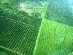 Belize Farming