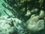 Snorkeling Mexico Rocks
