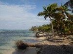 Beach  at Sanbore Caye Belize