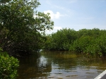 Boating through mangrove paths