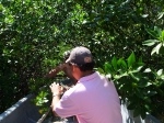 Amazing mangrove pathway
