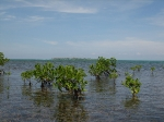 Sanboure Caye behind the mangroves