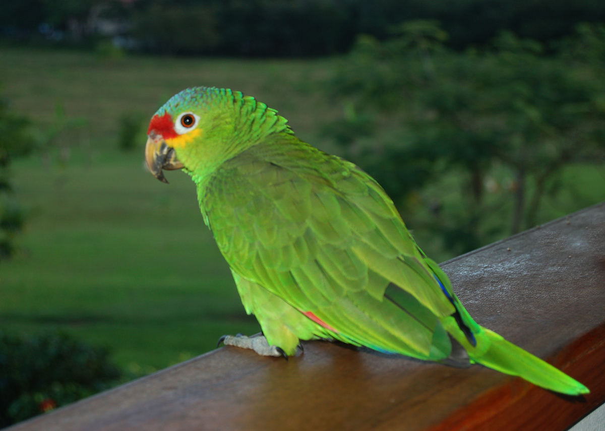 Be Kind Belize - Belize Bird Resue