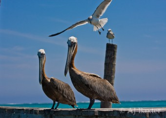 Ambergris Caye Pictures