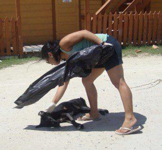 SAGA Belize Humane Society