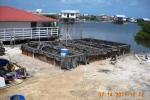 Waste Water Gardens Belize