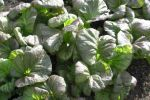 sol farms belize organic produce