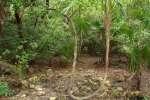 marco gonzalez maya ruin site