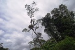 trees in the tropical rainforest