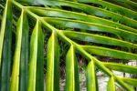 palmtree belize