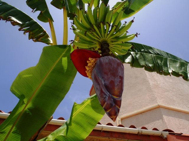 banana beach belize