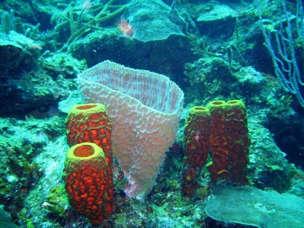 best diving in belize