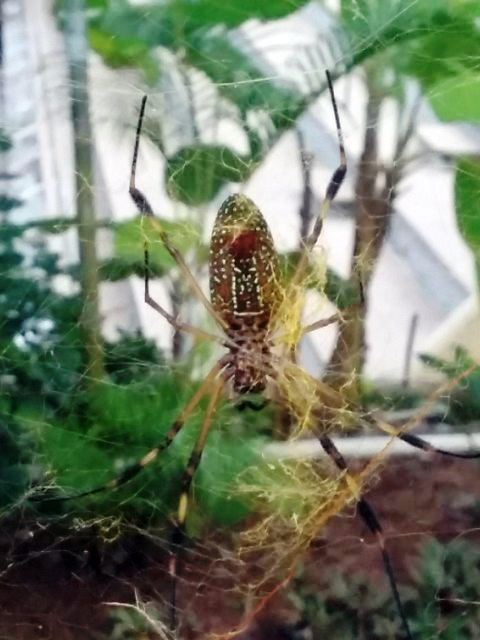 Bugs of Belize