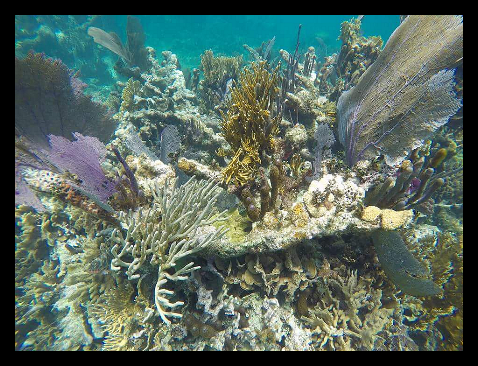 Hol Chan Marine Reserve Ambergris Caye