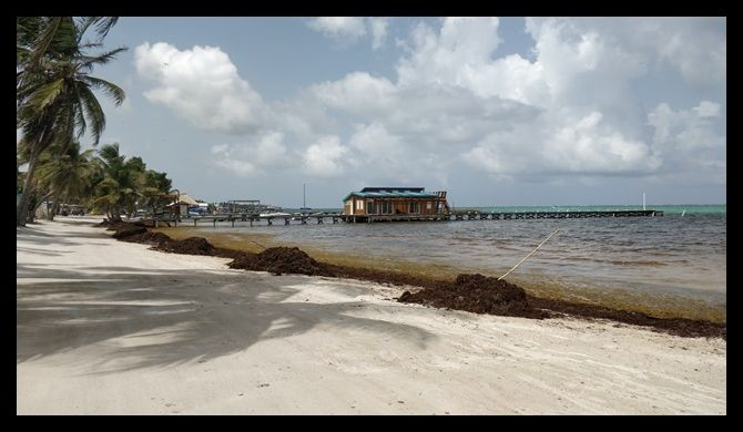 Sargasso July 2018 San Pedro Belize